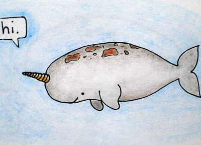 narwhal - random desktop wallpaper