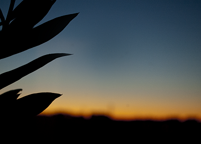 sunrise, silhouettes - random desktop wallpaper