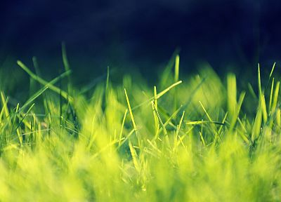 grass - random desktop wallpaper