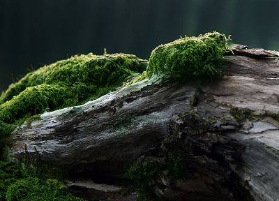 trees, moss - random desktop wallpaper