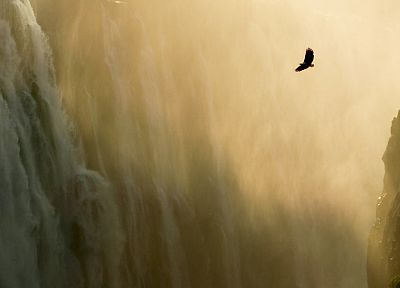 landscapes, animals, waterfalls - related desktop wallpaper