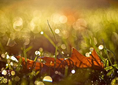 nature, leaf, autumn, drop, sunlight, reflections - desktop wallpaper