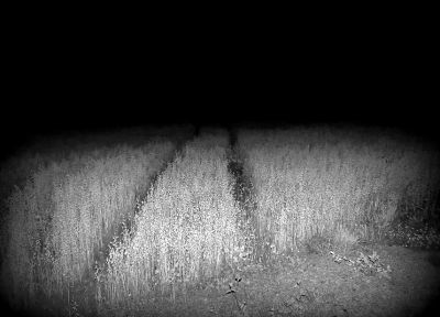 horror, nature, black, night, white, fields, monochrome - desktop wallpaper
