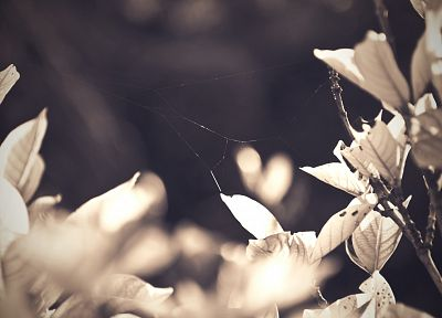 flowers, monochrome - related desktop wallpaper