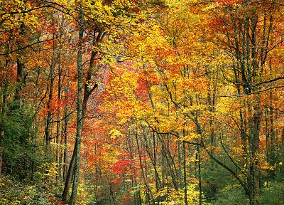 nature, trees, autumn, forests, woods, plants - related desktop wallpaper