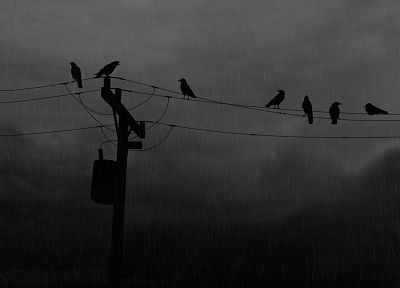 rain, silhouettes, power lines, monochrome, crows, greyscale - desktop wallpaper