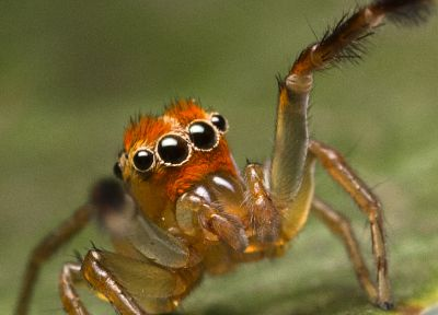 animals, insects, macro, spiders, arachnids - desktop wallpaper