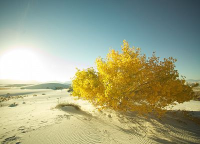 landscapes, nature, sand, deserts, macro - related desktop wallpaper