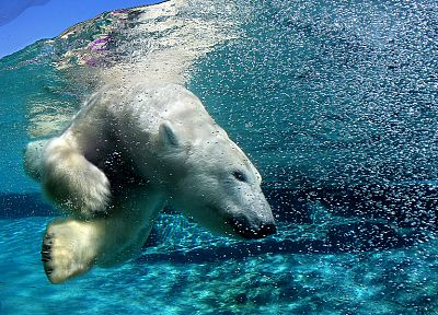 water, landscapes, animals, swimming, underwater, polar bears - random desktop wallpaper