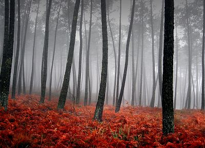 nature, trees, forests, fog - desktop wallpaper