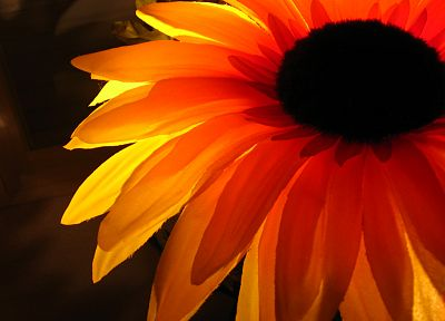 nature, flowers, orange, flower petals, sunflowers - desktop wallpaper