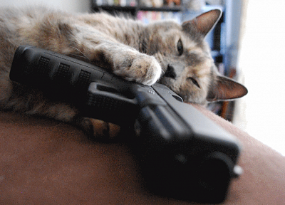 guns, cats - random desktop wallpaper