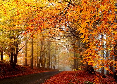 nature, trees, autumn, forests, roads - related desktop wallpaper