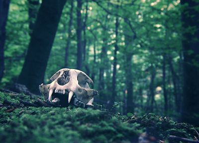 Cat Skull - random desktop wallpaper