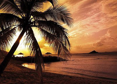 landscapes, nature, palm trees, beaches - desktop wallpaper
