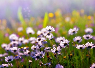 nature, flowers, depth of field, wildflowers - desktop wallpaper