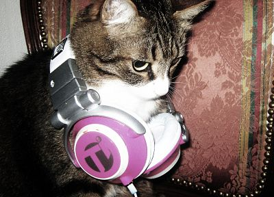 headphones, cats - random desktop wallpaper