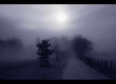 landscapes, trees, fog, mist - desktop wallpaper