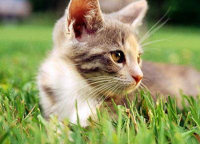 cats, grass, outdoors, kittens, low-angle shot - related desktop wallpaper