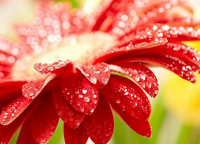 close-up, flowers, water drops, macro, depth of field - related desktop wallpaper