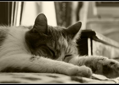 cats, sepia, sleeping - desktop wallpaper