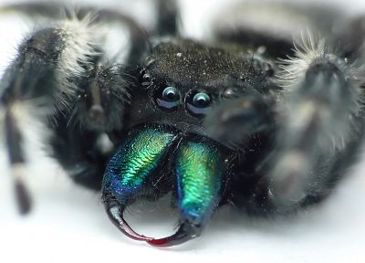 green, blue, eyes, black, animals, insects, spiders, arachnids - desktop wallpaper