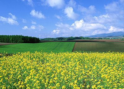 Japan, landscapes, nature, fields - random desktop wallpaper