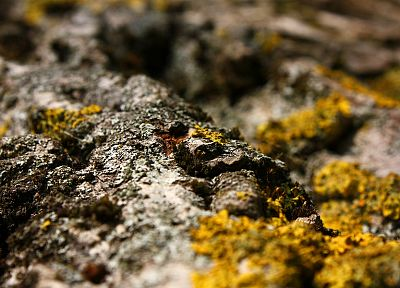 nature, rocks, moss - desktop wallpaper