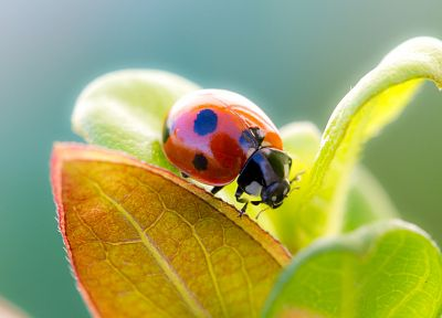 nature, plants, macro, depth of field, ladybirds - random desktop wallpaper