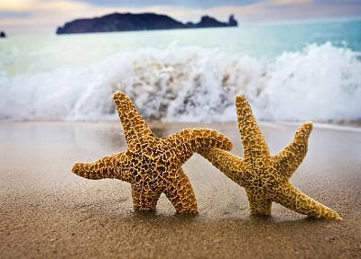blue, ocean, nature, sand, white, stars, yellow, orange, fish, rocks, brown, starfish, sea, beaches - desktop wallpaper