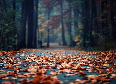 autumn, wood, leaves, depth of field, fallen leaves - related desktop wallpaper