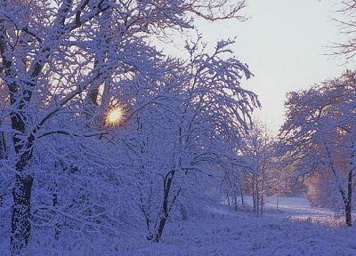 winter, snow, trees - random desktop wallpaper