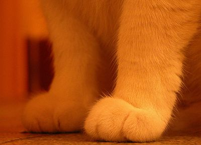 cats, animals, paws - related desktop wallpaper