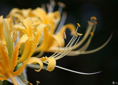 close-up, flowers, yellow flowers - random desktop wallpaper