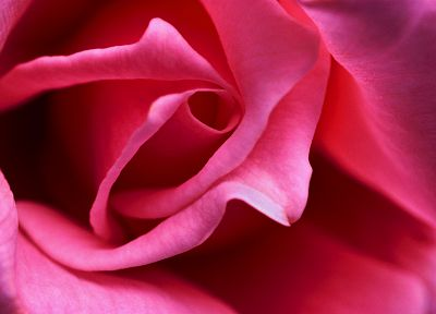 close-up, flowers, pink, macro, roses - related desktop wallpaper