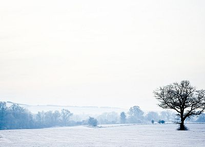 winter, England, Wonderland, countryside - random desktop wallpaper