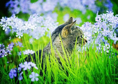 flowers, cats, animals, outdoors - related desktop wallpaper