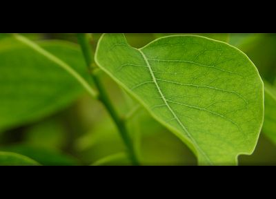 green, leaves, dual screen, depth of field - desktop wallpaper