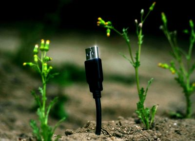 USB, plants - random desktop wallpaper