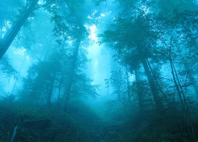 blue, landscapes, nature, trees, forests, fog, mist - random desktop wallpaper