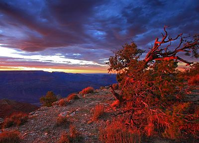 sunset, point, USA, Arizona, Grand Canyon, National Park, bushes - random desktop wallpaper