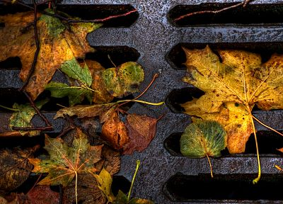 autumn, leaves, fallen leaves - random desktop wallpaper