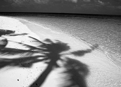 water, sand, Noir, shadows, monochrome, palm trees, beaches - related desktop wallpaper