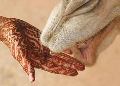 palm, hands, Henna - related desktop wallpaper