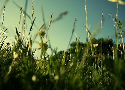 landscapes, nature, grass, fields, summer - related desktop wallpaper