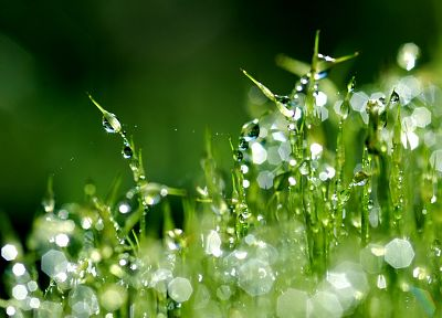 grass, water drops - random desktop wallpaper