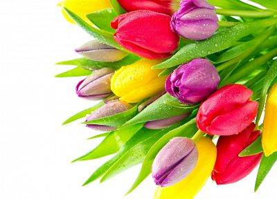 flowers, tulips, colors - random desktop wallpaper