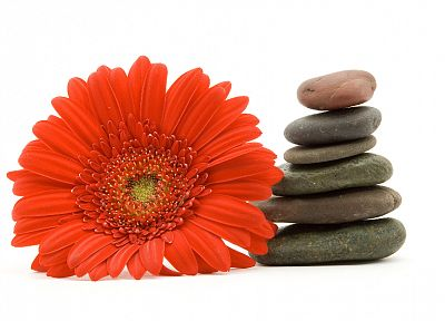 flowers, stones, pebbles, white background - related desktop wallpaper