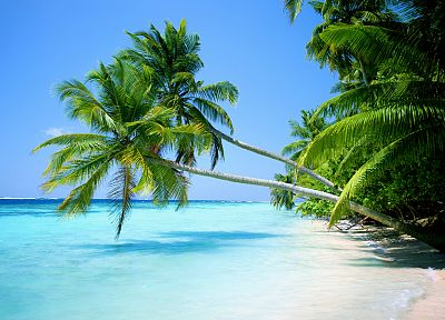 ocean, landscapes, nature, tropical, islands, palm trees, beaches - desktop wallpaper