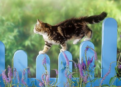 fences, cats, animals, depth of field, picket fence - related desktop wallpaper